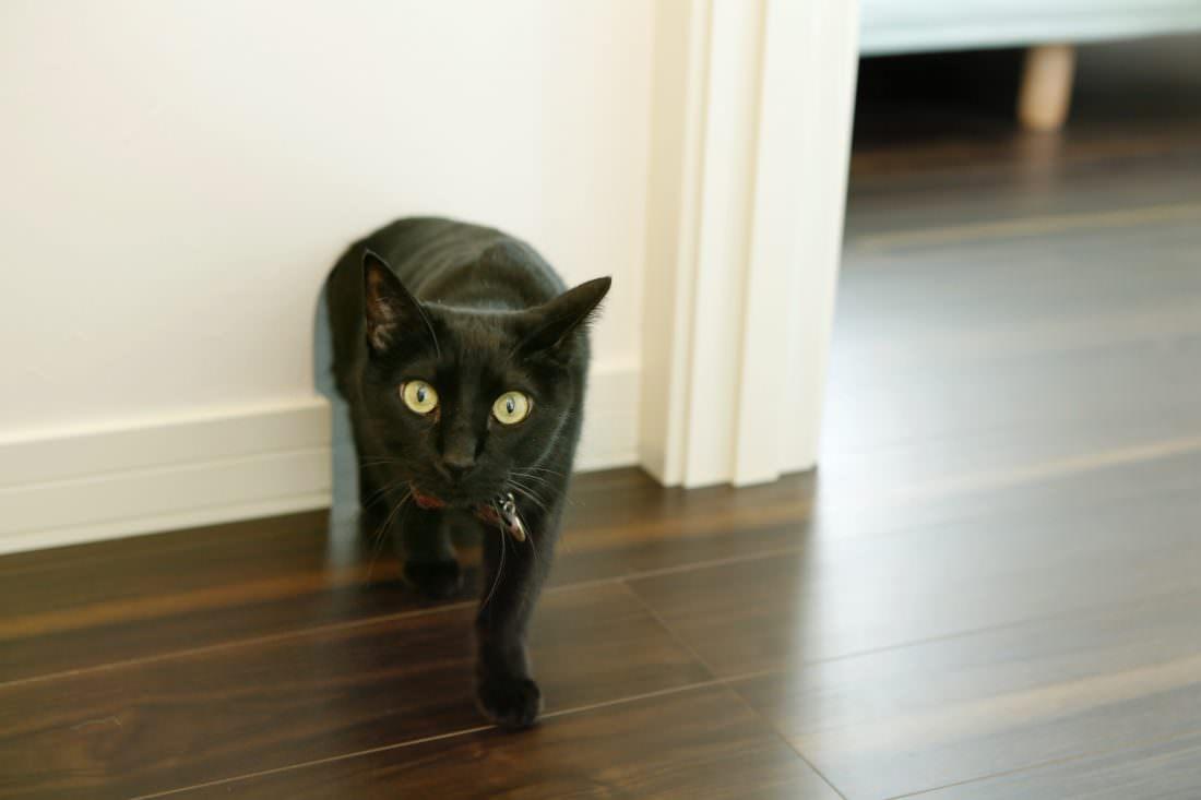 ネコちゃんのための通り口になるネコトンネル